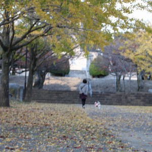 小倉北区、紅葉、平和公園